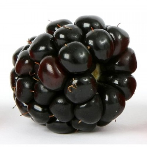 Natural Blackberry Flavor - MCT Oil Soluble